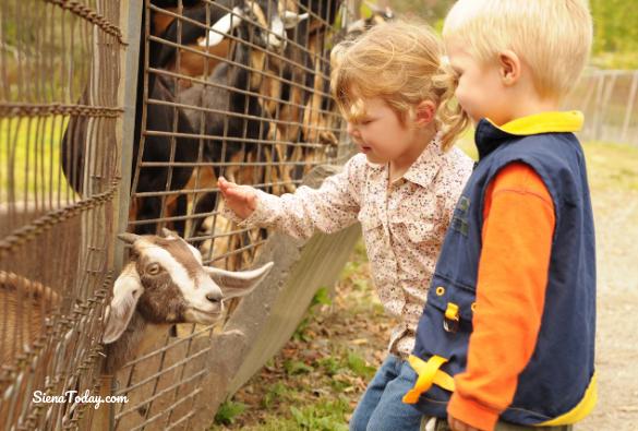 Petting Zoo (1)